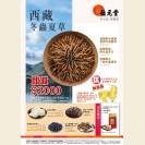 西藏冬蟲夏草